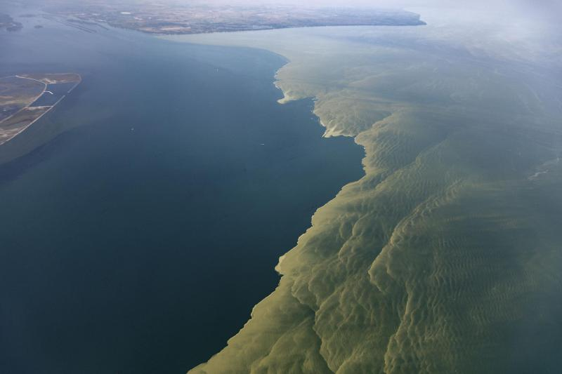 Algae bloom in Lake Erie, 2017